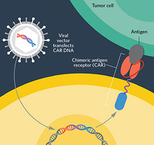 How is CAR-T Cell Therapy Different from Standard Chemotherapy?